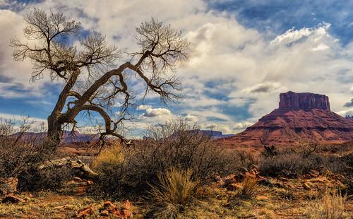 tree nature landscape rocks desert moutain deserted professorvalley ©jeffrclow dirtcheapphototour jeffclowphototour moabphototour