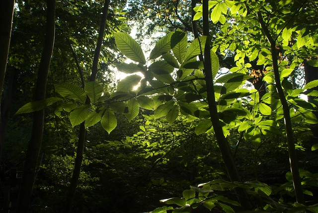 DSC_6876 Woodland