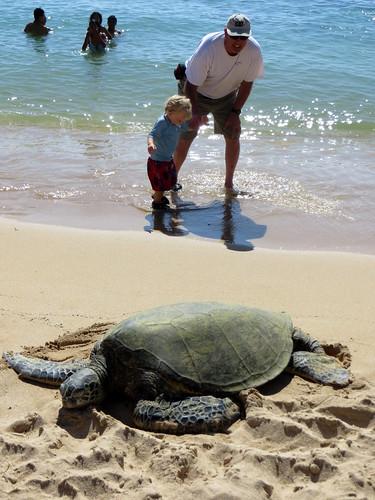 Hawaii - August 2013 080