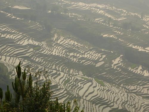 Yunnan13-Yuanyang 24-Bada (3)