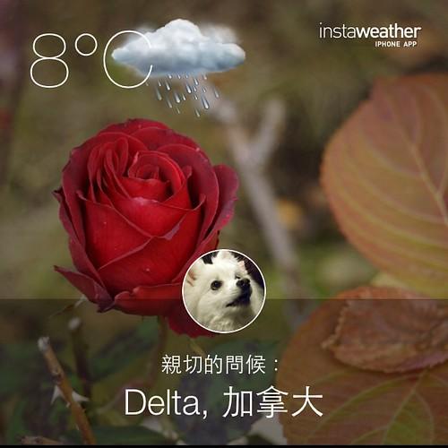 #weather #instaweather #instaweatherpro  #sky #outdoors #nature #world #love #followme #follow #beautiful #instagood #fun #cool #like #life #nice #happy #colorful #photooftheday #amazing #delta #加拿大 #day #autumn #rain #morning #cold #ca ☔️早安朋友☕️