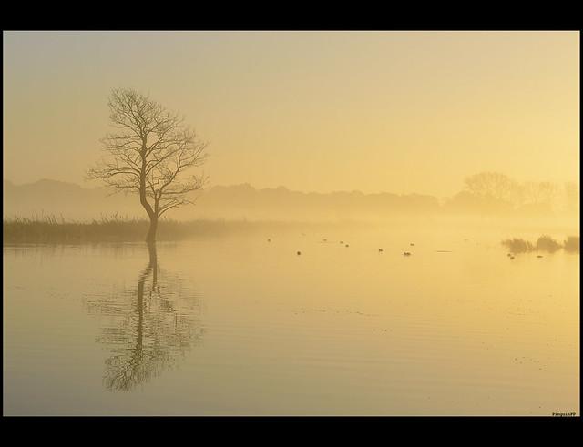 FV Flickr Top 5; 2-32: Sunny fog
