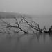 1/15/14 Potomac fog by wolfkann