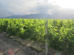 Principales terruños del Valle de Uco para el Malbec