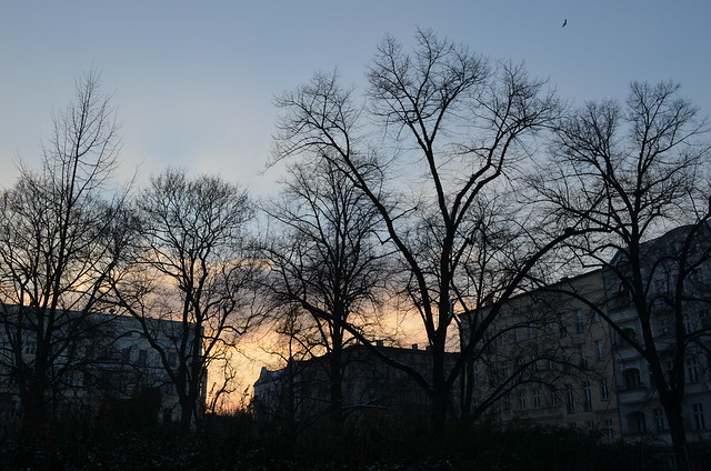 Sunset through the trees at Helmholtzplatz Berlin