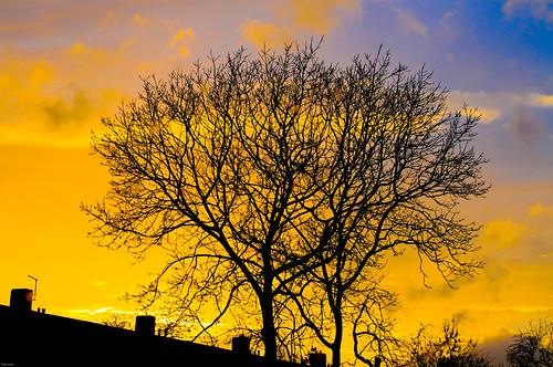 trees urban clouds skies rooftops silhouettes oxfordshire urbanphotography oxforduk urbanreality clivejones nikond300s urbanoxford copyrightclivejones {vision}:{plant}=0805 {vision}:{sky}=0608 {vision}:{mountain}=0747