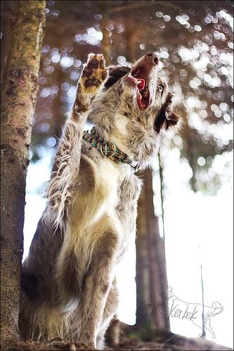 Triki naših psov 12839466313_378a8bace7
