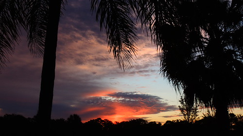 morning blue red wallpaper sky orange storm tree silhouette yellow night clouds sunrise palms landscape dawn spring flickr florida bradenton mullhaupt jimmullhaupt