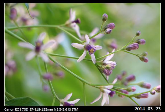 19_20140323_Purple