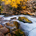 "Big Cottonwood Canyon by Scott Stringham ""Rustling Leaf Design"""