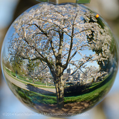 Crystal Ball Cherry Blossoms-145
