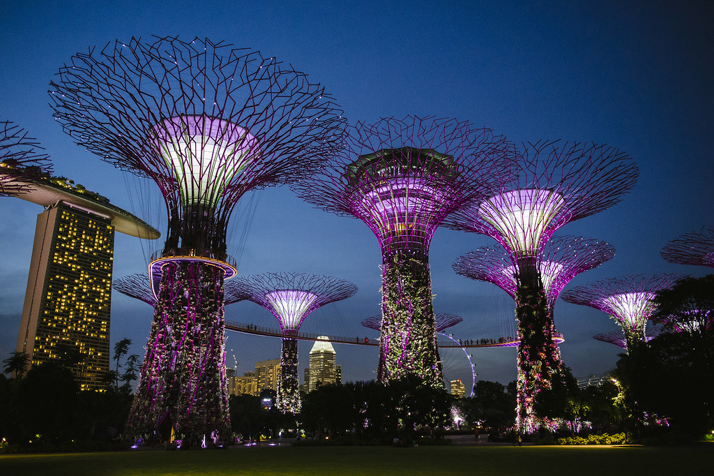 Travel Photography Supertree Grove Gardens By The Bay