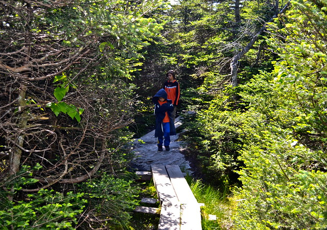 trails along Mount Mansfield Toll Road