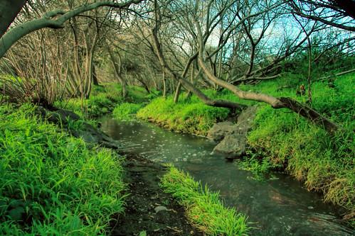 baxtercreek fantasy art artsy dream dreamy psychedelic el cerrto calif ca scenery nature trees brambles landscape eos60d 60d canoneos60d canon eos wdbones99