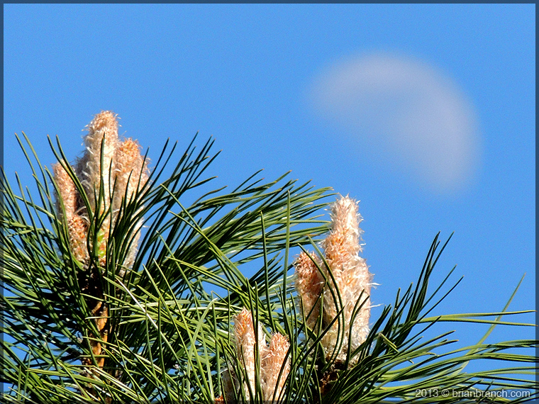 DSCN1109_pine_and_moon