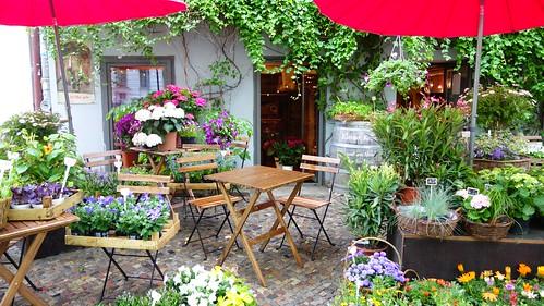 Flores en Kollwitzstraße