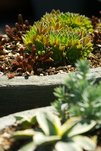 succulent planter  3386