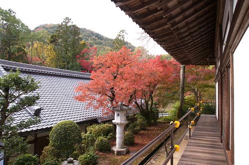 【写真】2012 紅葉 : 光明寺/2020-11-11/IMGP6508