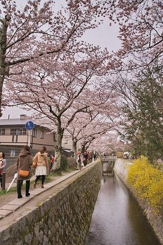 【写真】2013 桜 : 哲学の道/2018-12-24/IMGP9200