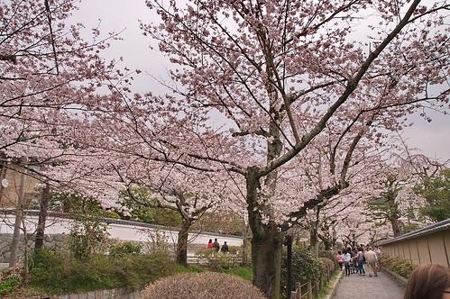 【写真】2013 桜 : 哲学の道/2018-12-24/IMGP9207