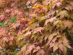 Foliage in Hobart Botanic Grdens.