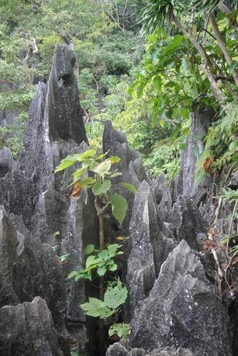 cliff el nido
