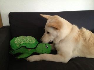 Balki with Kyjen Plush Puppies Lil Ripper Turtle