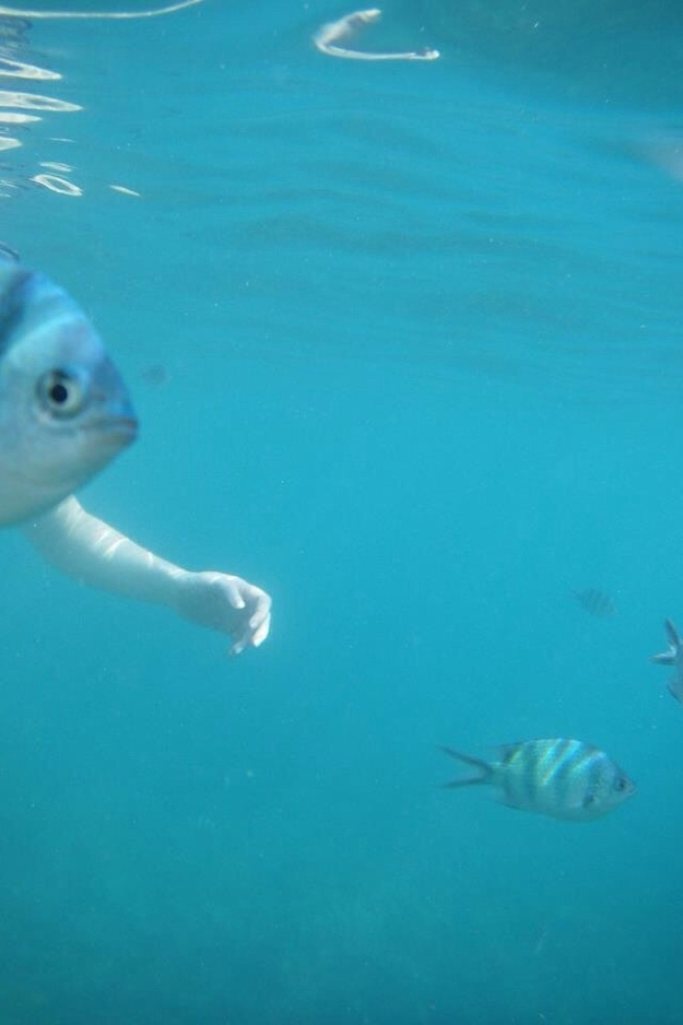 The perfectly timed one-armed fish picture: