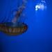 Shedd Aquarium 4
