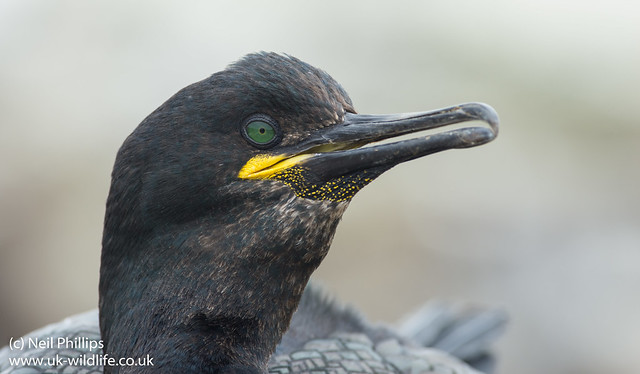 shag close up-2