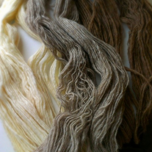Three shades of #Shetland. #handspun #wool #yarn