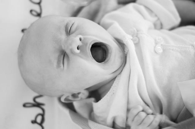 shea yawning