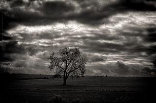 Bad Weather Tree