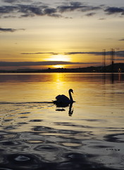 Sun setting over a solitary swan