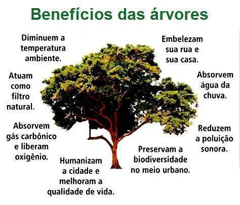 Dia Mundial Da árvore I Be Castanheira De Pera