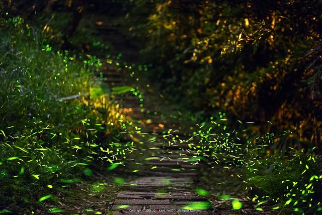 Firefly Galaxy -IMG_9860fu