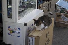Cats, Essaouira, Maroc