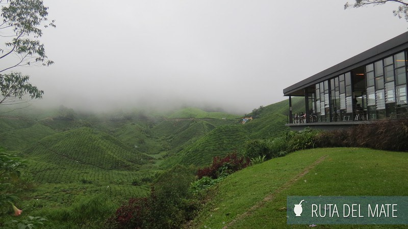 Cameron Highlands Malasia (2)