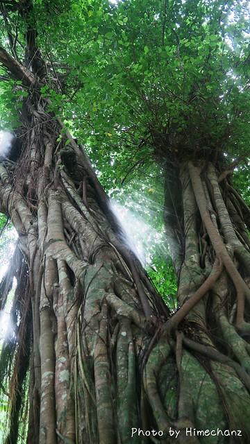 立派な木たちでした!!!