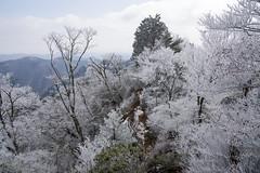 霧氷の花咲く岩稜帯