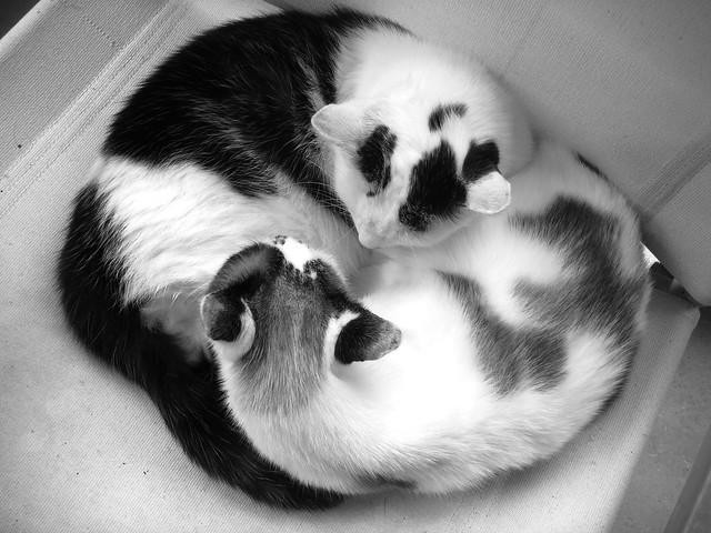 Yin & Yang Cats, Sony DSC-T100