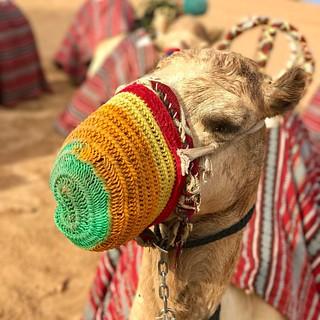 Ship of the desert #desert #desertsafari #dubai #platinumheritage #camel #portrait