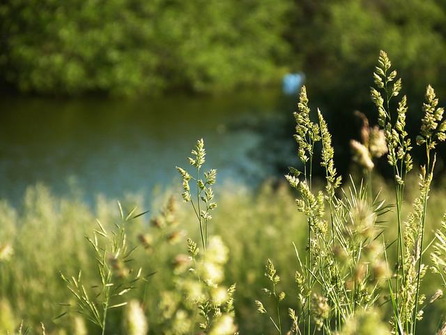 2june2013_weeds