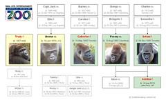 Gorilla Family - Little Rock