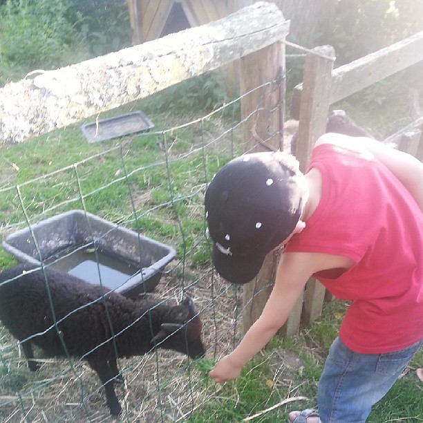On nourrit les animaux.  #camping #ferme #blog #blogueuse #france #famille #ourlittlefamily #family