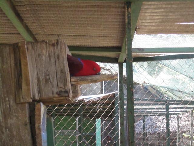 Попугай дрыхнет :)