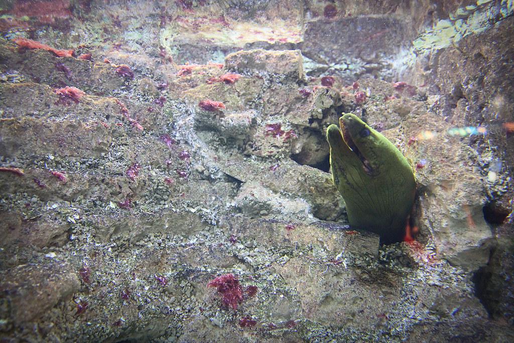 Atlantic City Aquarium Nj Christina Wagner Photography
