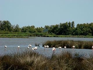 063 Flamingo's