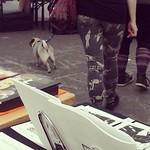 Pug at #sarjakuvafestivaalit