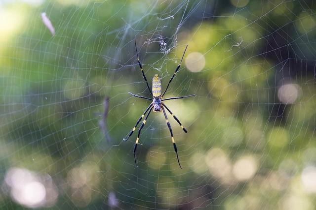Jufukuji - spider